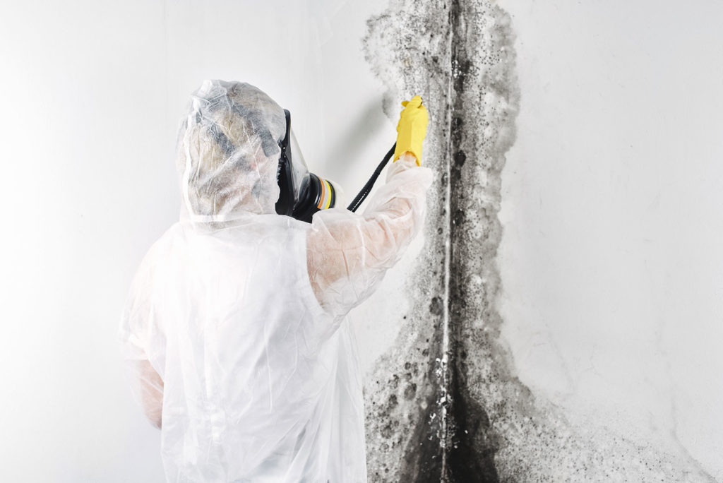 mold removal Denver